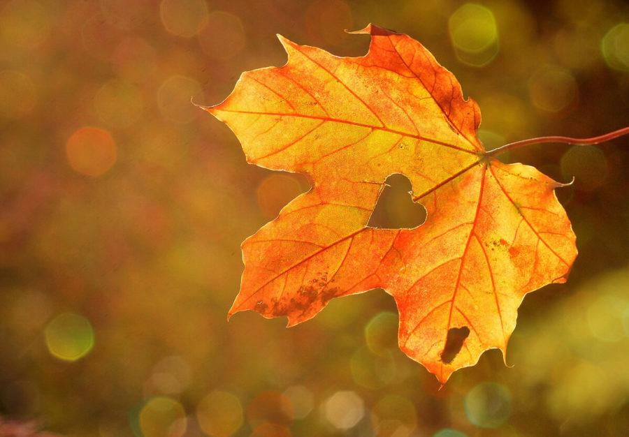 Inspiracje na jesienny taras