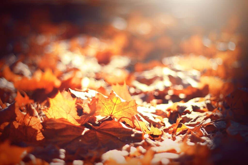 10 rzeczy, które jesienią przydadzą się w ogrodzie.