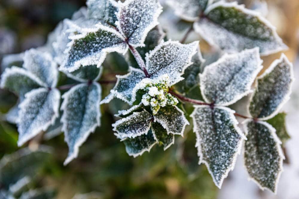 Czy warto mieć ogród zimowy? Inspiracje na ogród zimowy!
