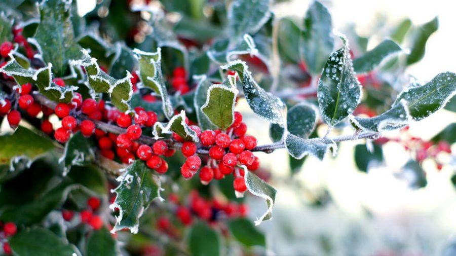 Piękny taras przez cały rok: zalety roślin zimozielonych