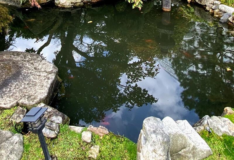 oczko wodne prace w ogrodzie