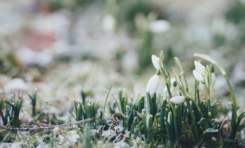 pierwsze rośliny w marcu